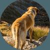 Dog Breeds category image