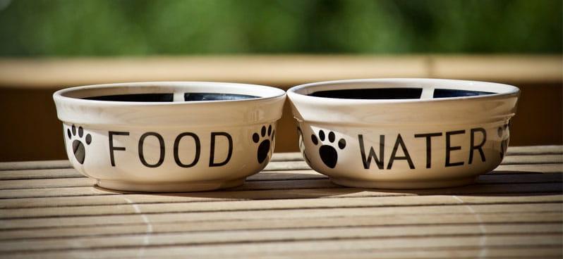 dog-food-and-water-bowls
